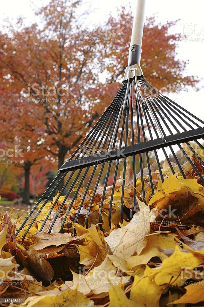 Raking Colorful Leaves royalty-free stock photo