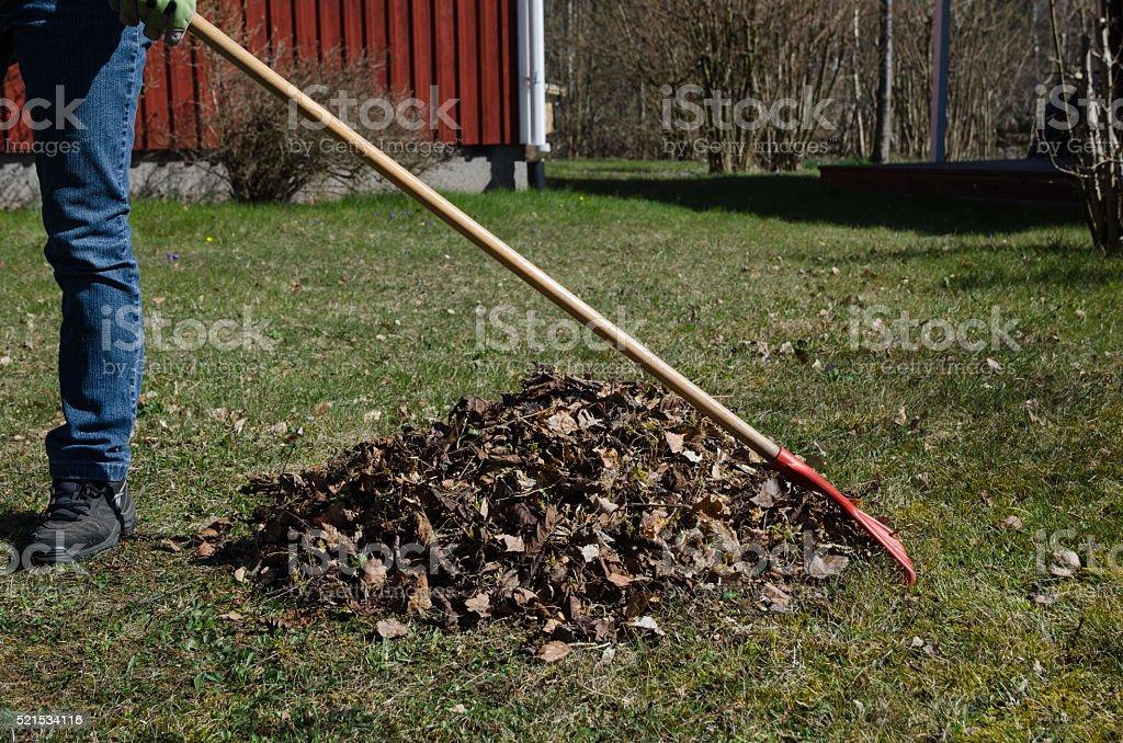 Raking dry leaves at spring stock photo