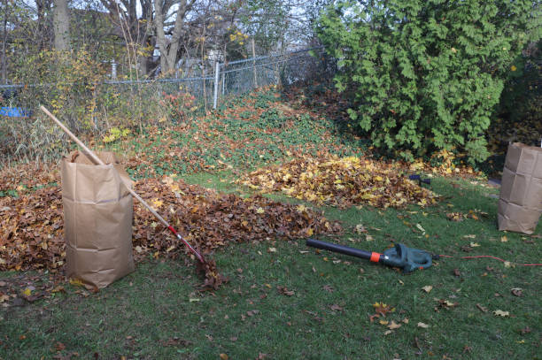 Raking Leaves, Boston, MA stock photo