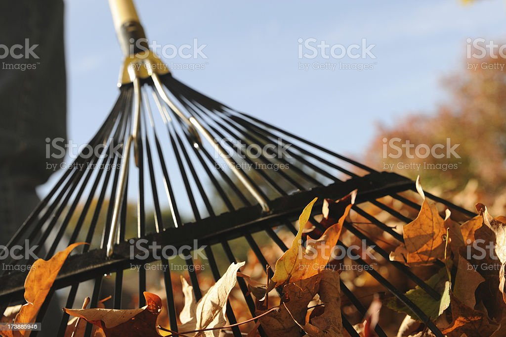 Raking Leaves on a Sunny Fall Day royalty-free stock photo