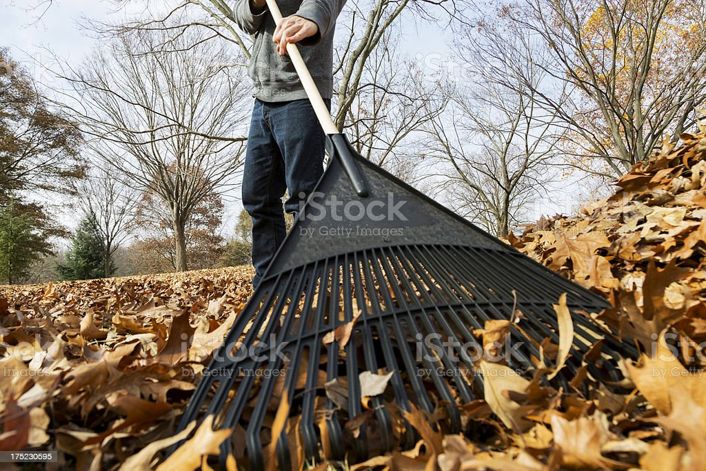 Raking Leaves stock photo