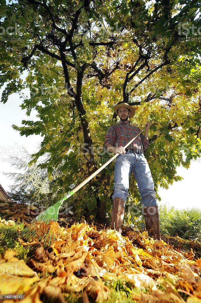 Raking leaves royalty-free stock photo