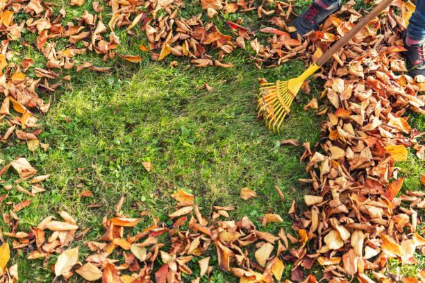 Raking Blätter – Foto
