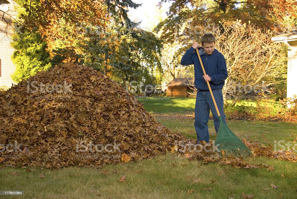 Raking Leaves Teen Boy in Blue Sweatshirt stock photo