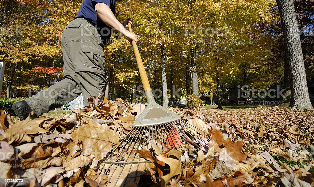 Raking leaves, wide angle view - Royalty-free Active Lifestyle Stock Photo