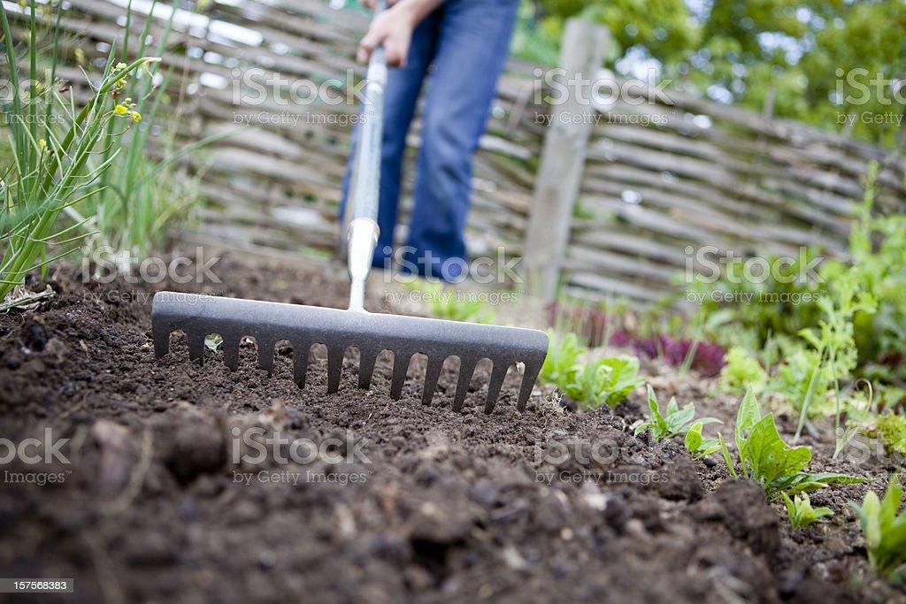 Raking the garden to prepare soil for planting royalty-free stock photo