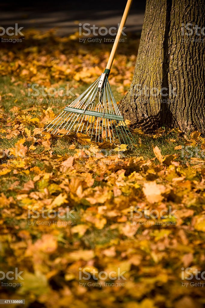 Raking the leaves in autumn royalty-free stock photo