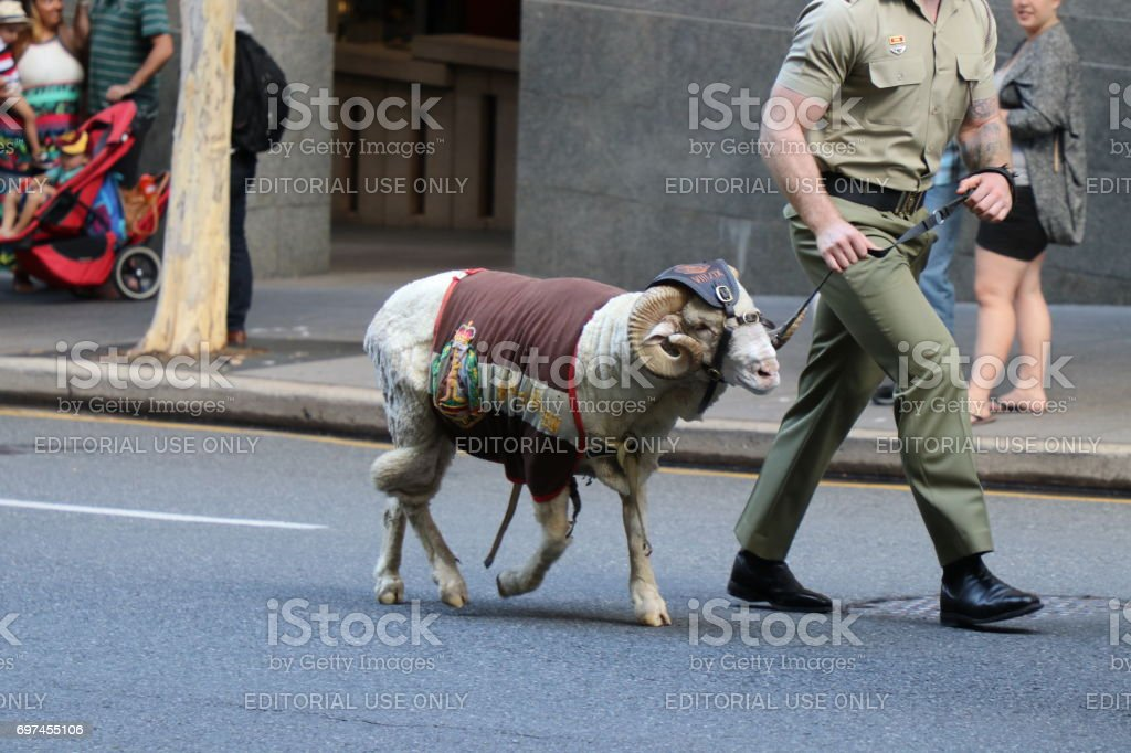 Ram being led by soldier stock photo