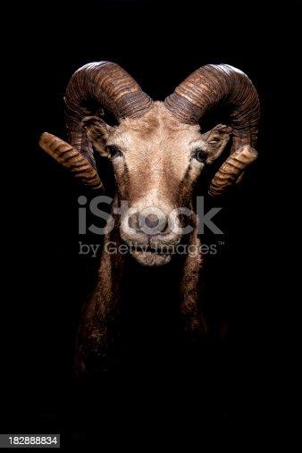 A ram head shot with dramatic lighting.