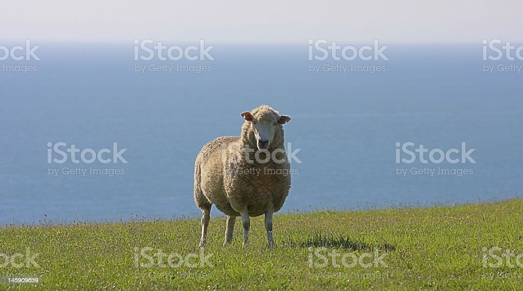 Ram with a View stock photo