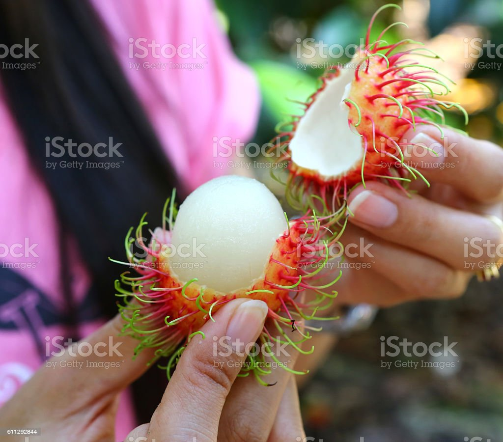Rambutan in hand ready for eat stock photo