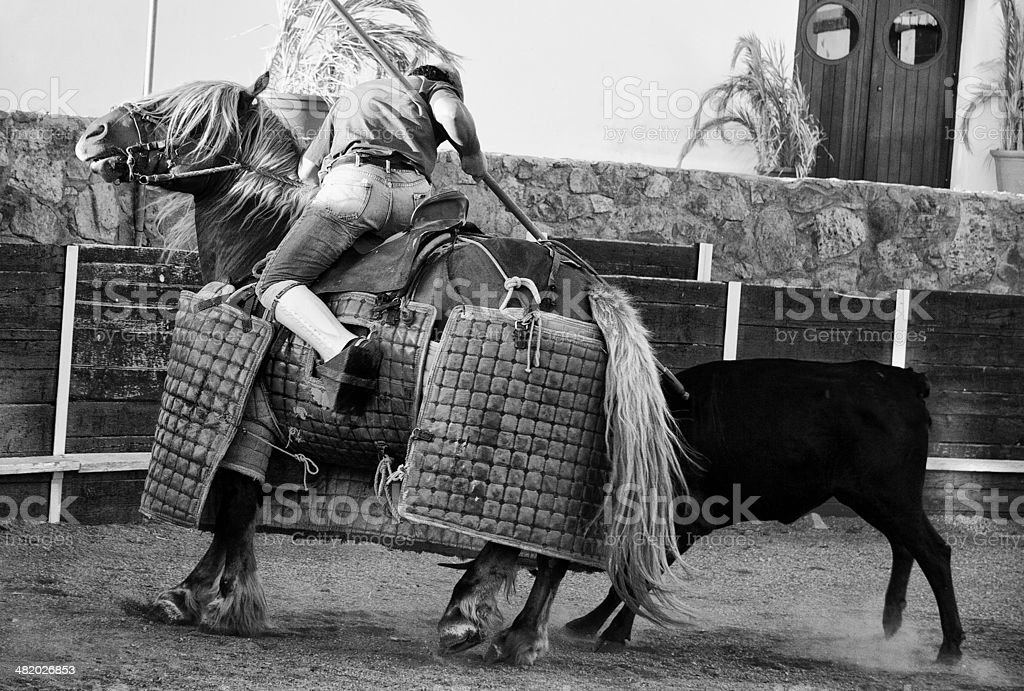 Ramming the picador's horse stock photo