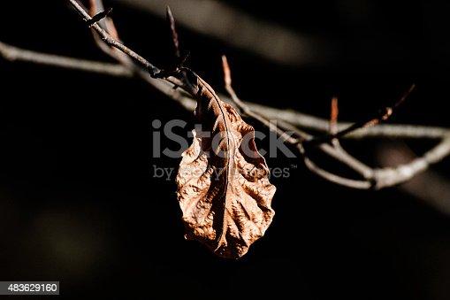 composizione fotografica a colori orizzontale di un ramo con una singola foglia secca illuminata dal raggio del sole in inverno