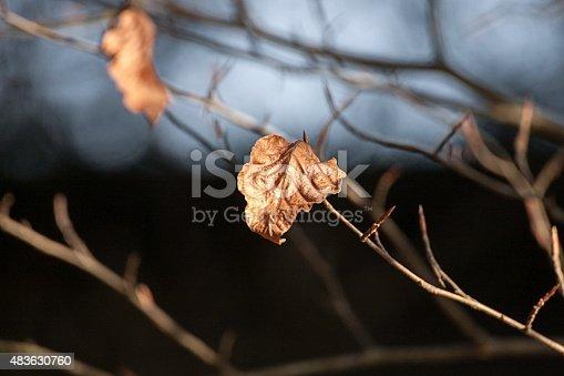 composizione fotografica colori di un ramo con foglia secca