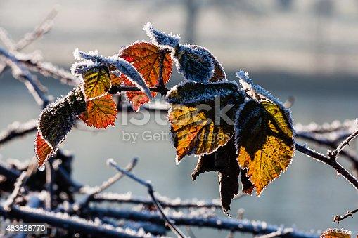 fotografia di un ramo con foglie secche in controluce ricoperte dalla brina