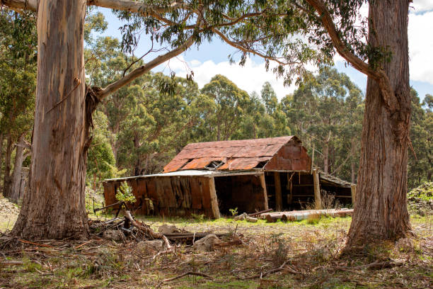 Ramshackle falling down old rural shed stock photo