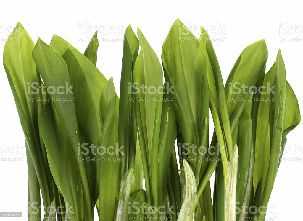 Ramson bunch royalty-free stock photo