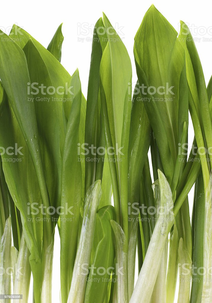 Ramson bunch vegetable royalty-free stock photo