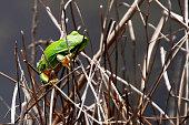 Fotografía de una rana sujetándose en unas ramas de una charca de agua