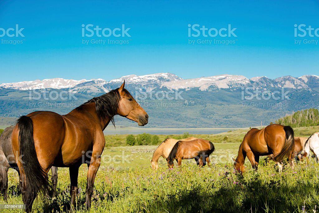 Ranch:  Beautiful, healthy sleek horses grazing on the mountainside. stock photo