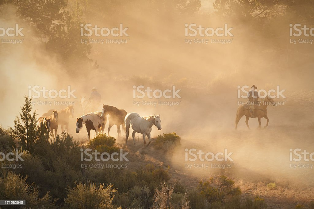 Ranch hands tending to a herd of horses at sunrise. stock photo