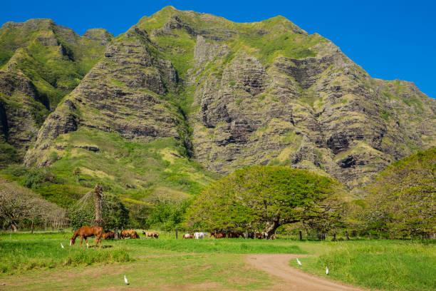 Ranch in hawaii picture id901001184?b=1&k=6&m=901001184&s=612x612&w=0&h=mvj6gfhbhh225ovif4xxgbpp2w5thgdj0xjw hwa5uk=
