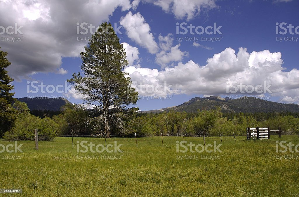 Ranch Meadow royalty-free stock photo
