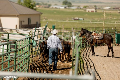 High quality stock photo of an authentic rancher driving livestock into an animal pen in an outdoor rodeo arena.