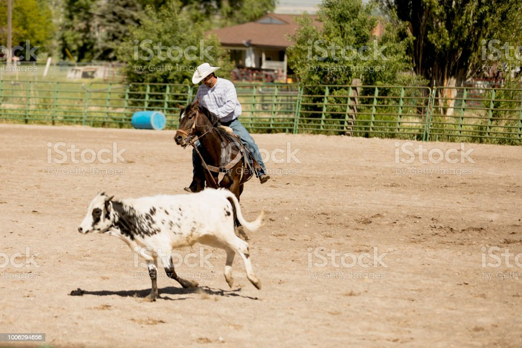 High quality stock photo of an authentic rancher driving livestock...