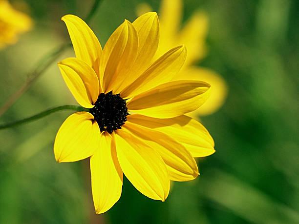 Random Wildflower stock photo
