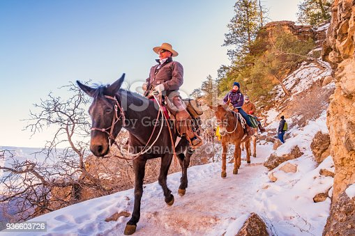 Ranger leads a group of tourists on a mule ride adventure tour on the Bright Angel Trail in Grand Canyon National Park, South Rim, Arizona, USA.