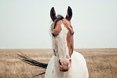 Beautiful horse in a field in south Alberta near Fort Macleod.