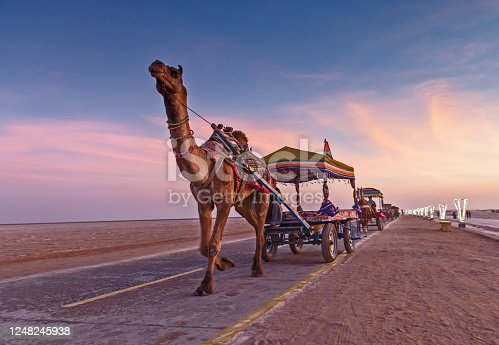 Decorated camel cart at Rann Festival