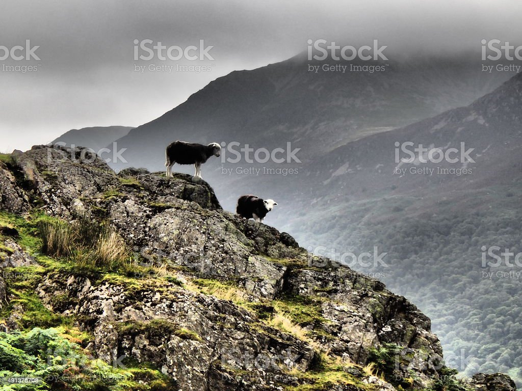 Rannerdale Knotts and Herdwick Sheep stock photo