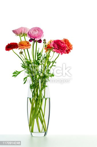 Bunch of colorful ranunculus in vase on white.