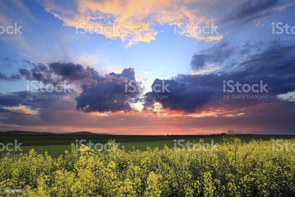 Rape field after sunset - landscape royalty-free stock photo