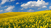 Rape Field II