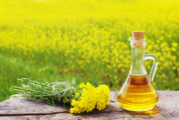 rape field outdoor rape field outdoor oilseed rape stock pictures, royalty-free photos & images