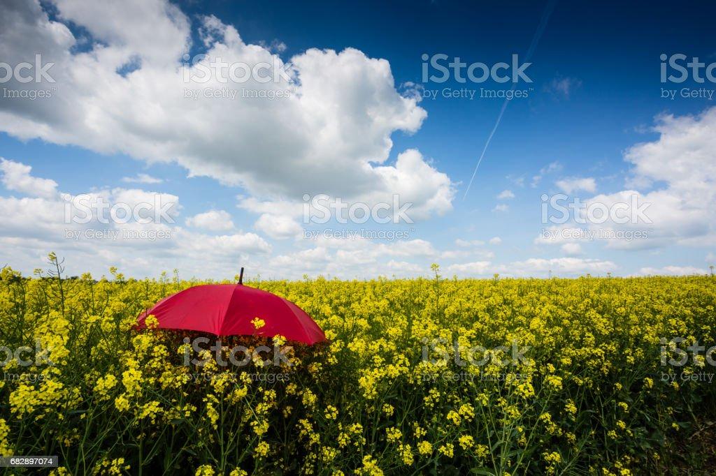 rapsfeld mit roten Regenschirm Lizenzfreies stock-foto