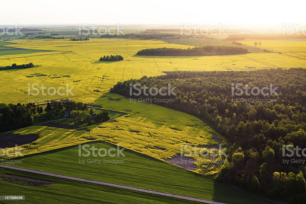 Rape fields in Lithuania, Europe stock photo