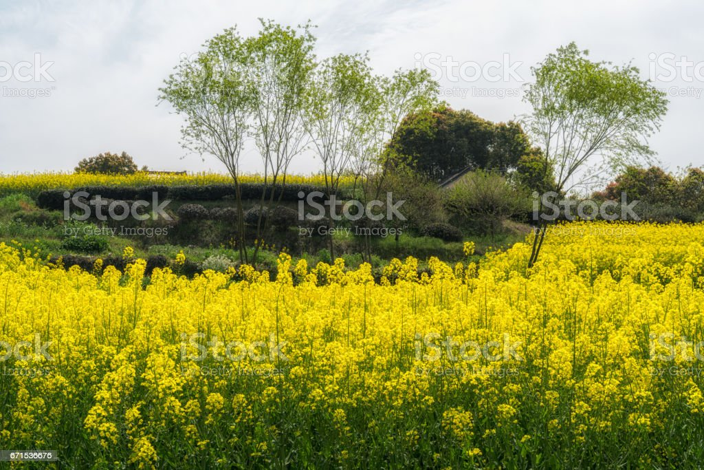 Rape Hills stock photo
