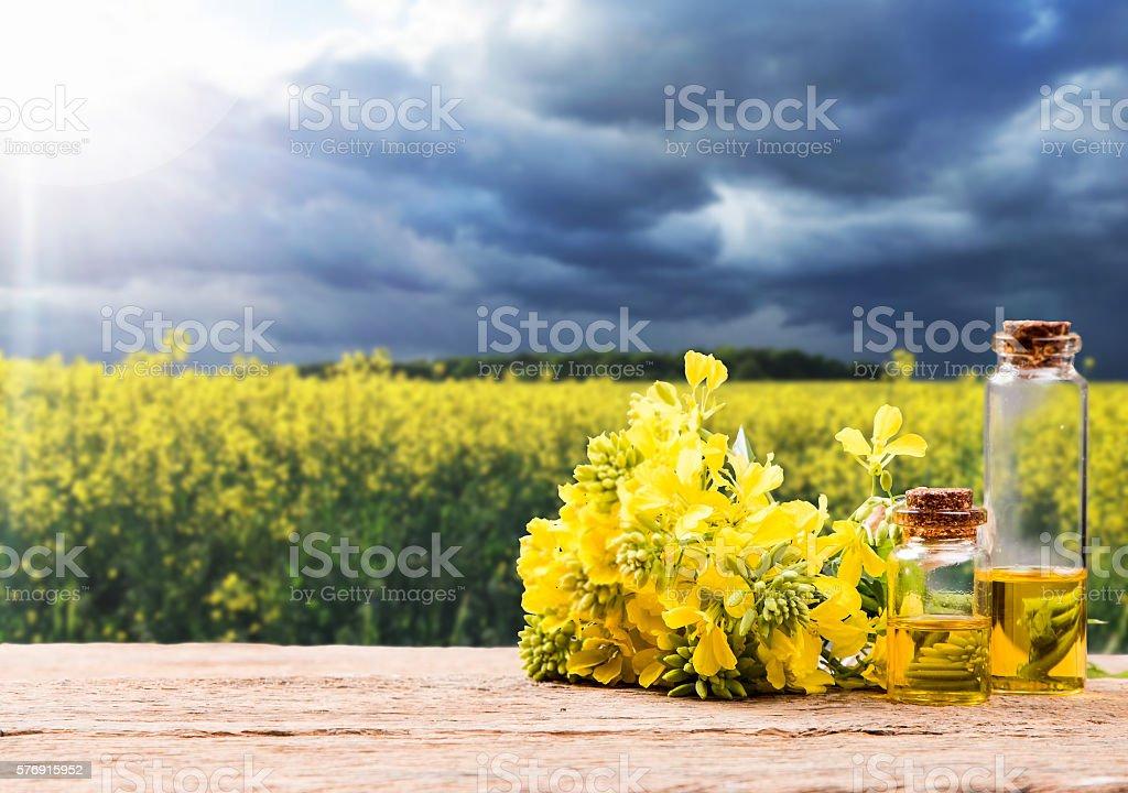 Rape oil stock photo