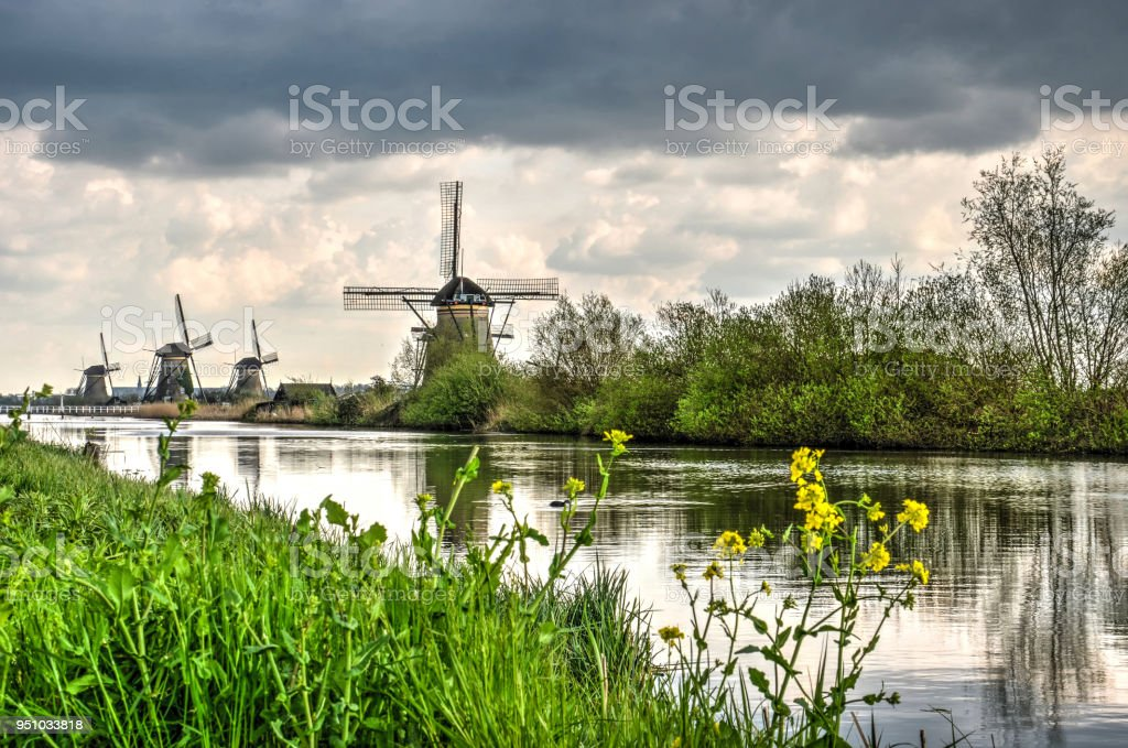 Rapeseed along a canal in Kinderdijk stock photo