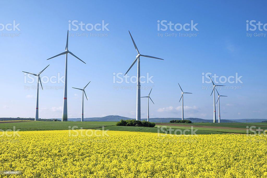 Rapeseed and windwheels stock photo