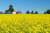 菜種フィールドと風車