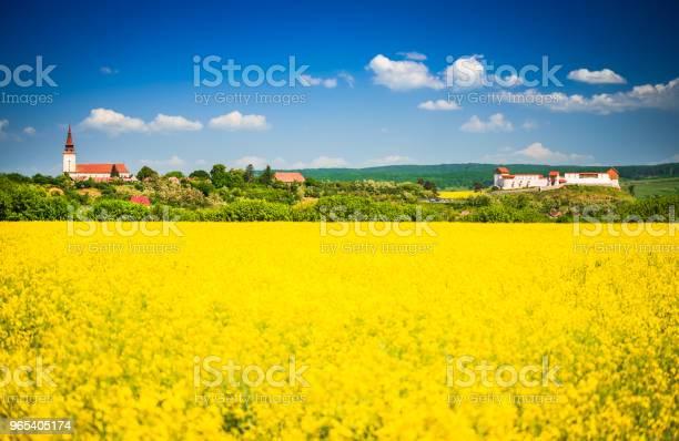 Foto de Campo De Colza Fortaleza Feldioara Roménia e mais fotos de stock de Agricultura