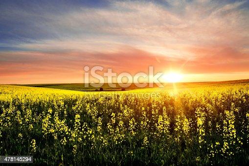 Wonderful rural scene of blooming rapeseed field on sunset