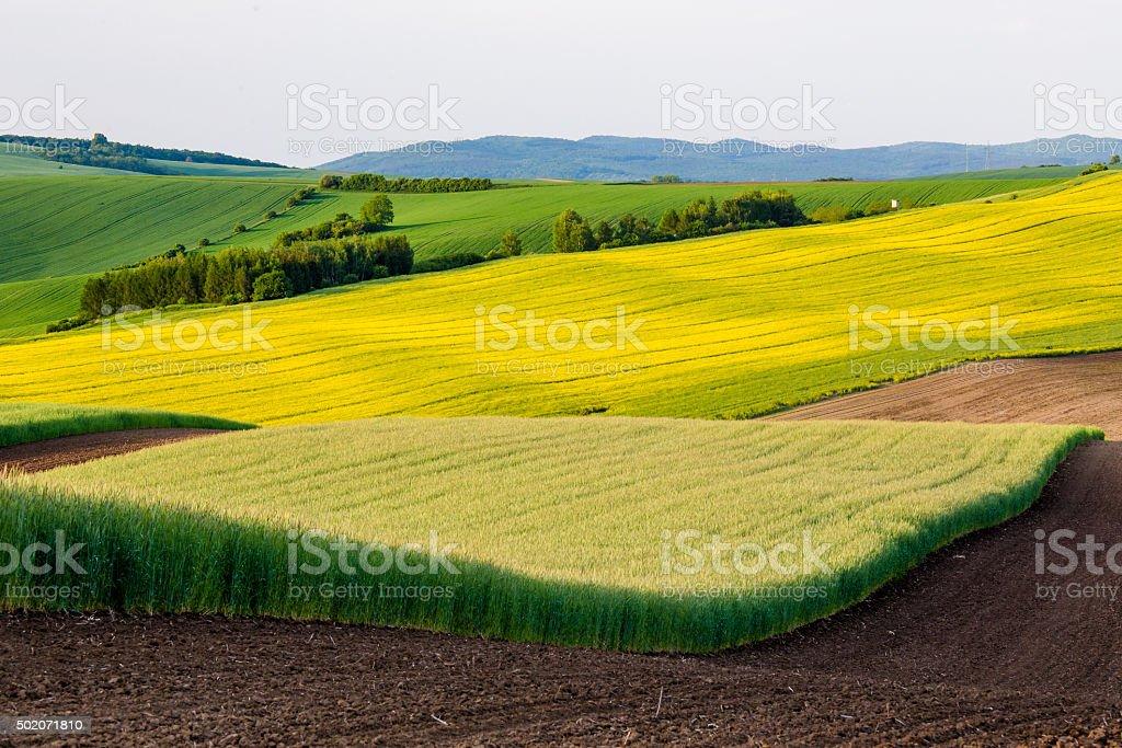 Rapeseed fields stock photo