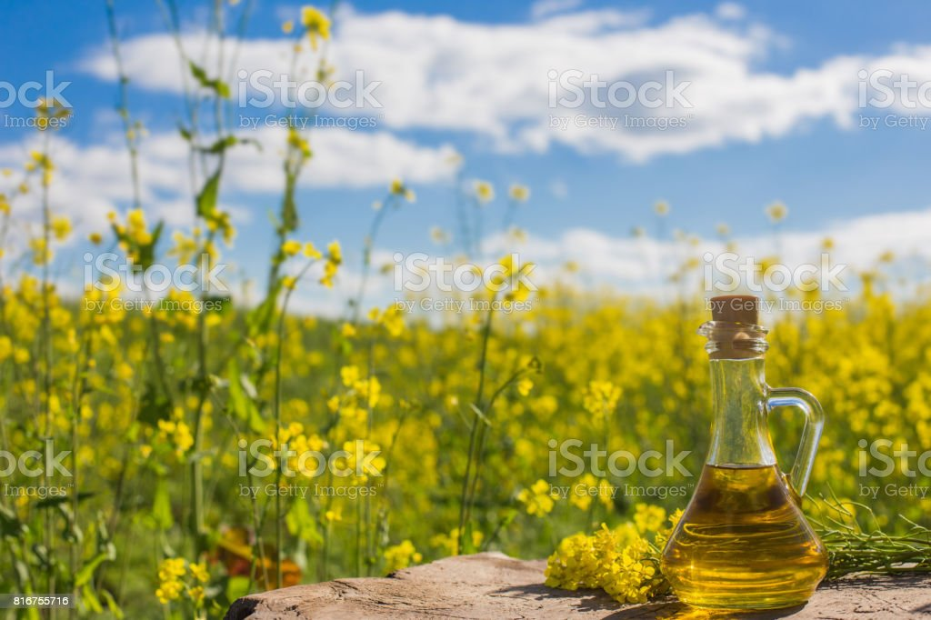 rapeseed oil (canola) on background field and sky stock photo