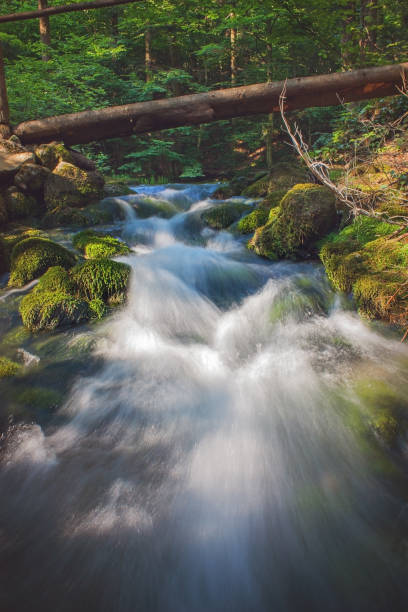 Rapid river flowing through dense green forest stock photo